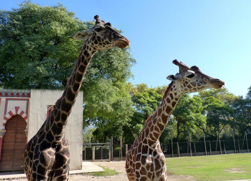 El zoológico de Buenos Aires nos permitirá ver animales exóticos y disfrutar de un ambiente agradable en familia